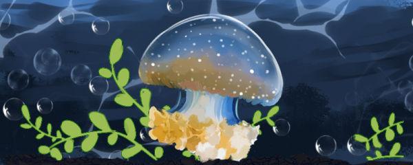 海蜇是水母吗,和水母有什么区别