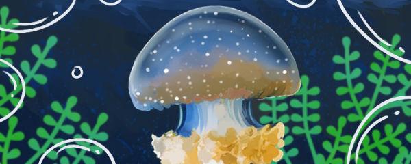 海蜇能养吗,怎么养