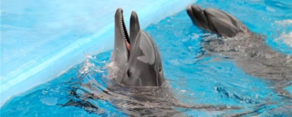 海豚和鲸鱼一样吗,有什么区别