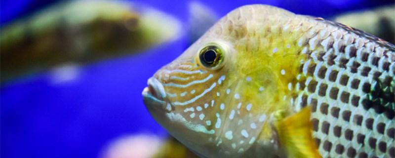 海底有什么鱼,哪些鱼生活在海底
