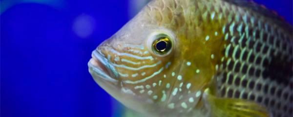 办公室养什么鱼,哪些鱼适合养在办公场所
