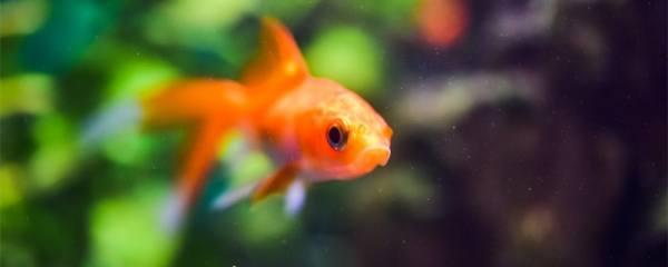鱼身上有黑点怎么办,有黑点是生病了吗