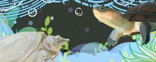 甲鱼和乌龟能一起养吗,能和鱼一起养吗