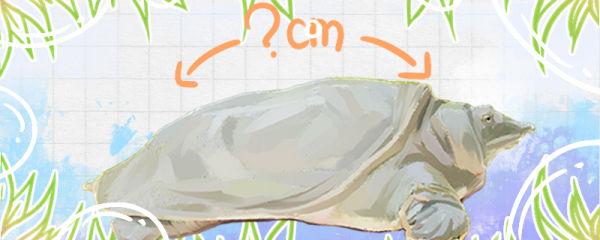 甲鱼能长多大,多大能分出公母