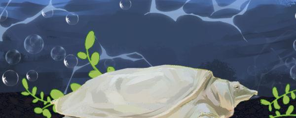 甲鱼是冷血动物吗,会不会冬眠