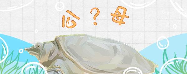 甲鱼怎么分公母,公母能一起养吗