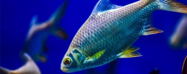 鱼掉鳞片是怎么回事,鱼掉鳞片用什么药