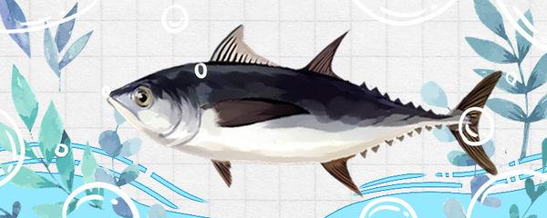 金枪鱼是三文鱼吗,哪个体型大
