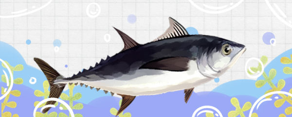 金枪鱼和吞拿鱼是同一种鱼吗,有什么区别