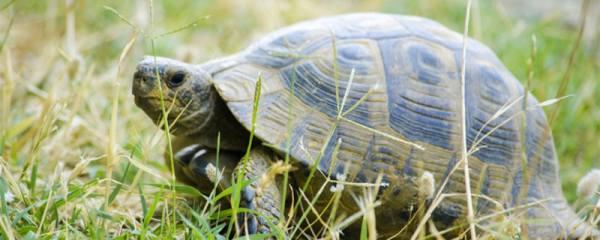 龟有哪些品种,哪种龟好养