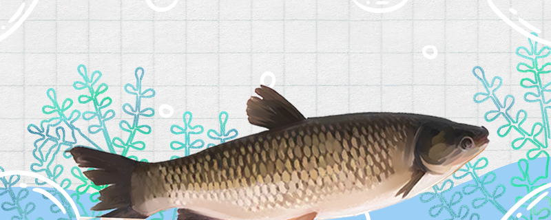 1亩鱼塘能养多少草鱼,能养出10000斤草鱼吗-轻博客