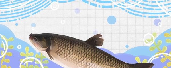 草鱼多久能长大,多大能繁殖