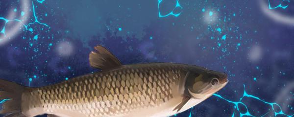 自来水能养草鱼吗,怎么养才不死