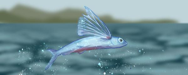飞鱼是什么鱼,属于海水鱼吗