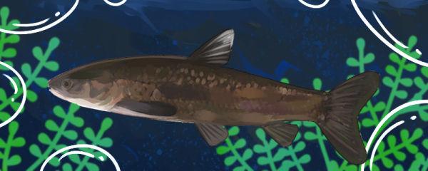 青鱼能自己繁殖吗,为什么不能自己繁殖