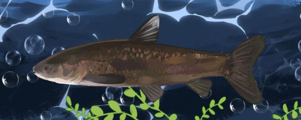 青鱼怎么养,用多深的水养好