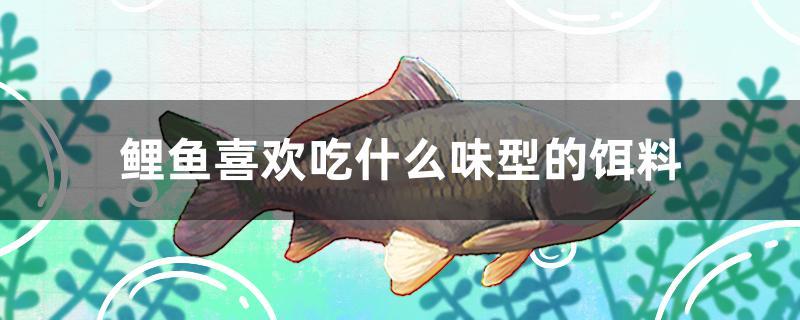 鲤鱼喜欢吃什么味型的饵料-轻博客
