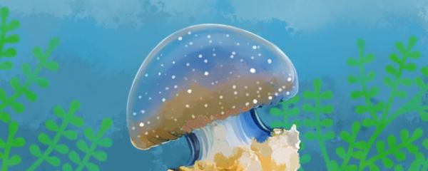 赤月水母能活多久,可以当宠物养吗