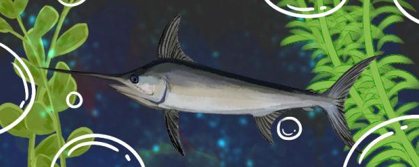 剑鱼是海鱼还是淡水鱼,在淡水中能活吗