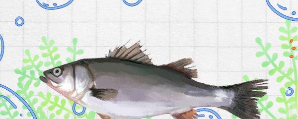 鲈鱼是淡水鱼还是海鱼,能用海水养吗