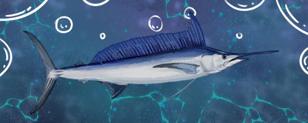 旗鱼能有多快,为什么游得那么快