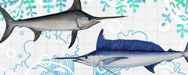 旗鱼与剑鱼哪个厉害,哪个游泳快