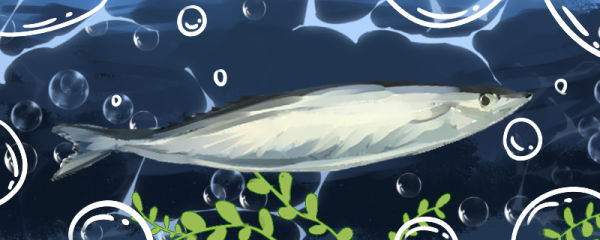 秋刀鱼刺多吗,和刀鱼比哪个刺多