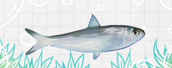 沙丁鱼和鲅鱼是一种鱼吗,有什么区别