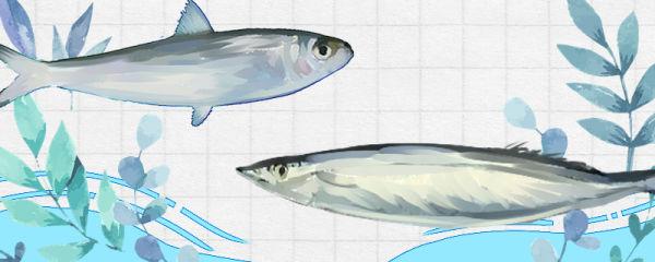 沙丁鱼和秋刀鱼是同一种鱼吗,有什么区别