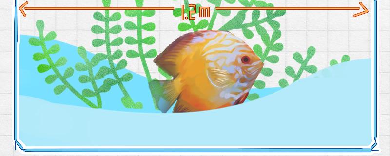七彩神仙鱼能活多久,多大才能繁殖