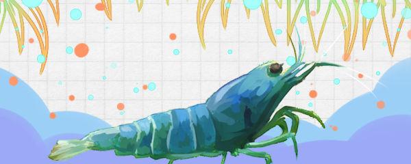 什么虾吃鱼的粪便,鱼的粪便如何清理