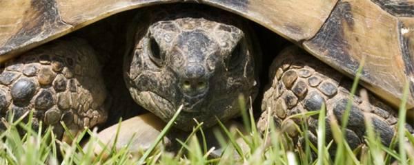 养乌龟放多少水合适,乌龟对水有什么要求