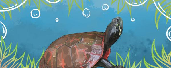 养乌龟有什么好处,养龟的优点有哪些