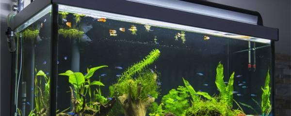 什么鱼不用打氧也能活,哪些鱼耐低溶氧