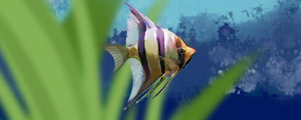 埃及神仙鱼不吃食是什么原因,怎么处理