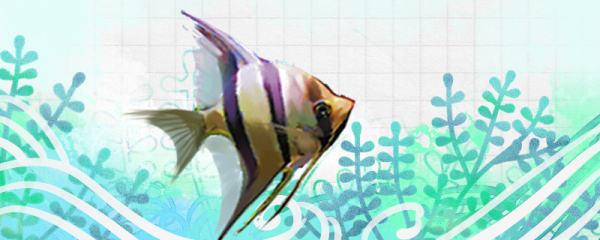 埃及神仙鱼好养吗,怎么养