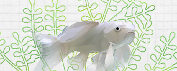 蝴蝶鲤能和什么鱼混养,能和鹦鹉鱼混养吗