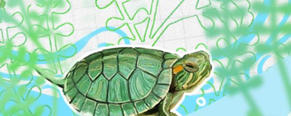 斑彩龟好养吗,怎么养