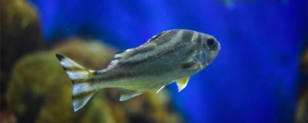 清理鱼屎可以用哪些工具鱼,什么鱼可以清洁鱼缸