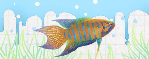 新买的鱼缸怎么开缸养鱼