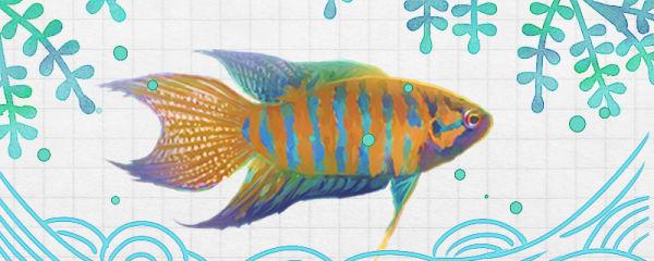刚买的鱼为什么第二天就死了,养鱼容易死是什么原因