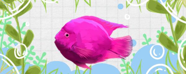 刚买的鱼为什么会沉底,鱼沉底有哪些原因
