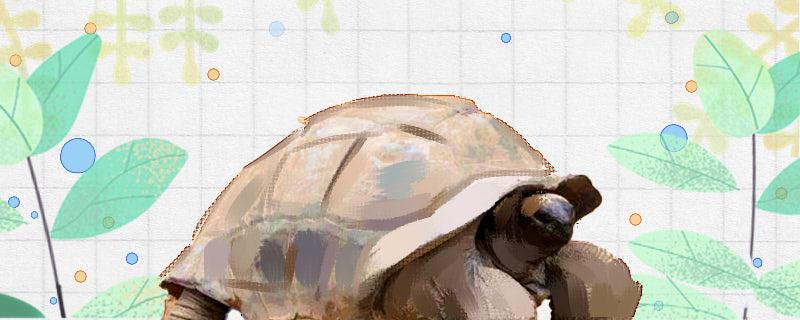 什么乌龟寿命长,活得长的乌龟有哪些