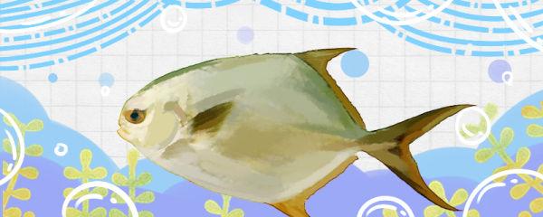 鲳鱼和武昌鱼是同一种鱼吗,有什么区别