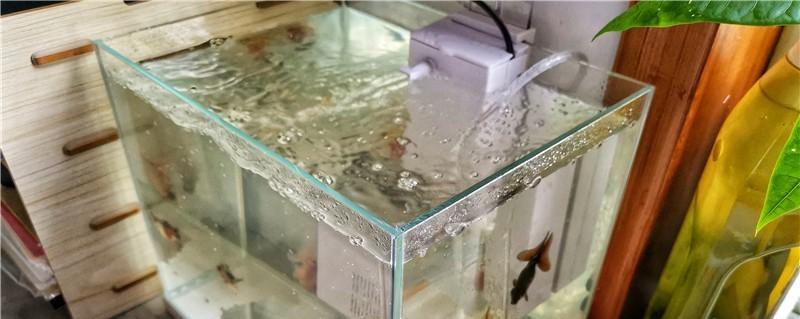 底滤鱼缸原理是什么,底滤有哪些组合