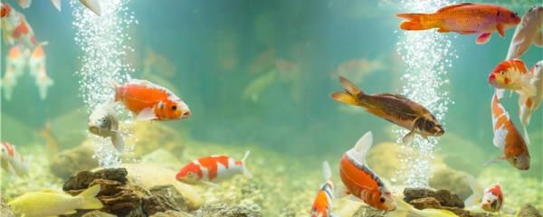 底滤鱼缸如何正确打氧,什么时候给鱼缸打氧