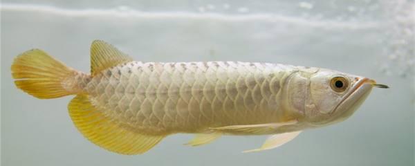 氧气泵放在底滤行不行,养什么鱼需要打氧气