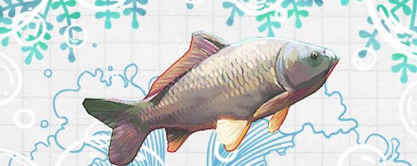 鲤鱼烂尾病是什么原因,怎么治