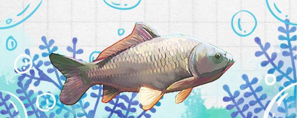 鲤鱼有脊椎吗,有牙齿吗