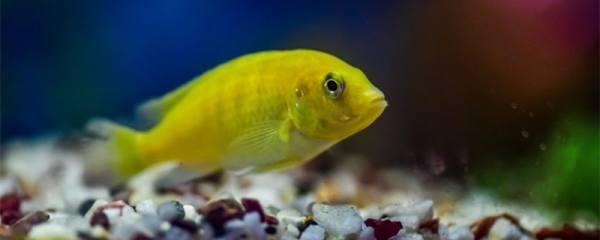 水泥池养鱼为什么总死,养鱼养不活有哪些原因